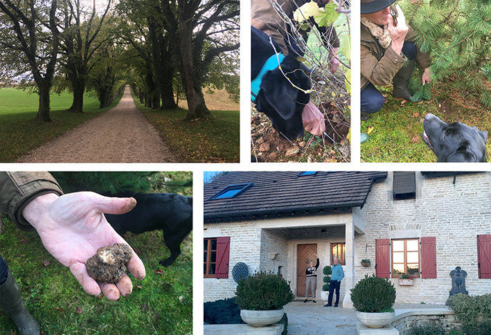 hunting for truffels champagn france